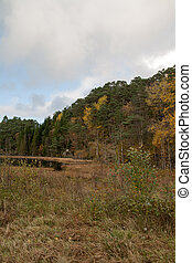 秋, 中に, ∥, 森林