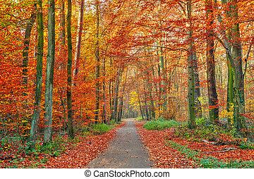 秋, 公園, カラフルである