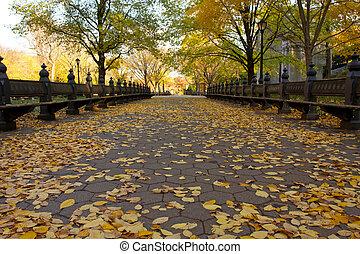 秋, 公園, 中央である, ヨーク, 新しい
