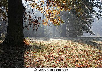 秋, 公園, 朝