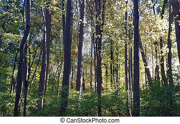 秋, 公園, 群葉, 木