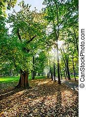 秋, 公園, sunn, 絵のよう