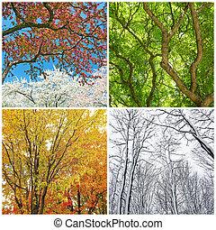 秋, 夏, 木, 冬, 春