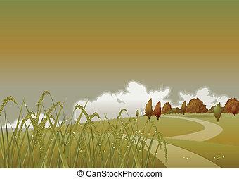 秋, 夕方, 小麦