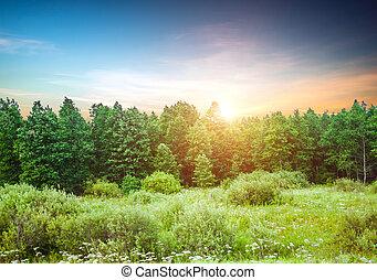 秋, 夕方, 森林
