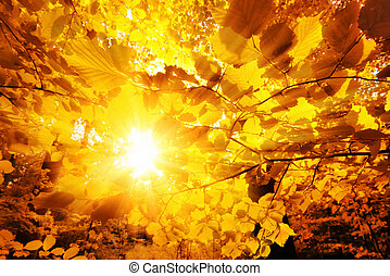 秋, 太陽, 葉, によって, 照ること