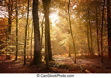 秋, 新しい森林, 風景