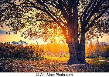 秋, 日当たりが良い, オーク, 公園, 木