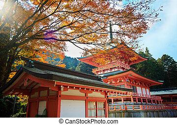 秋, 日本 かえで, 庭