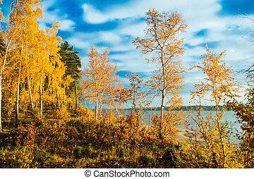 秋, 明るい, 森林, カラフルである