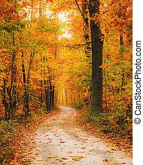 秋, 明るい, 森林