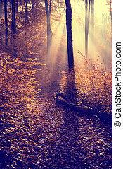 秋, 景色。, すばらしい, 美しい
