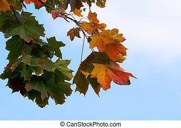 秋, 景色