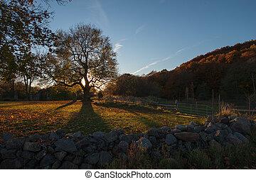 秋, 木, オーク, 古い