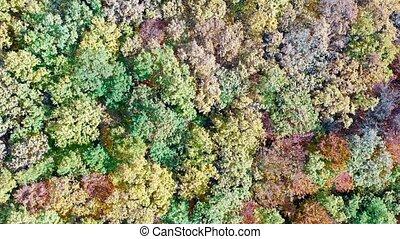 秋, 木, 無人機, 森林, 群葉, 光景