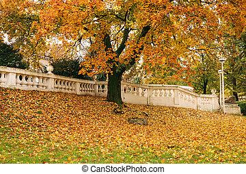 秋, 木, 葉, 公園, カラフルである