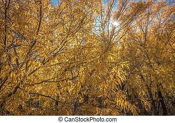 秋, 木, leaves., 秋, park., 秋