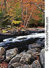 秋, 森林, そして, 川の景色