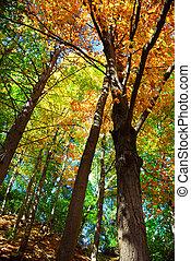 秋, 森林