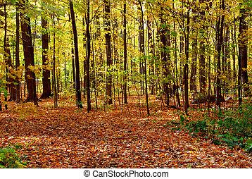 秋, 森林, 風景