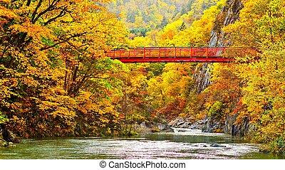秋, 歩道橋, 川, 横切って