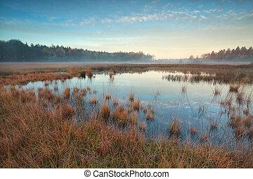 秋, 泥地, 上に, 森林, 日の出