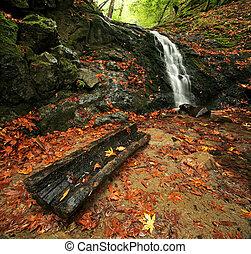 秋, 滝, 森林, 雨