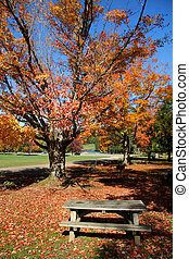 秋, 現場, 中に, a, 公園