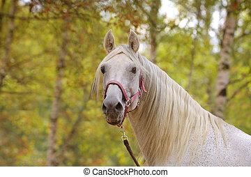 秋, 白い馬