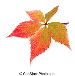 秋, 白, 葉, 背景