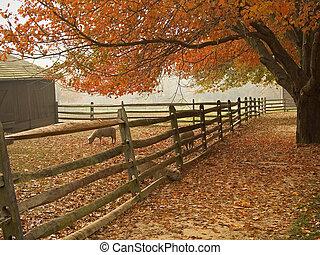 秋, 納屋の前庭