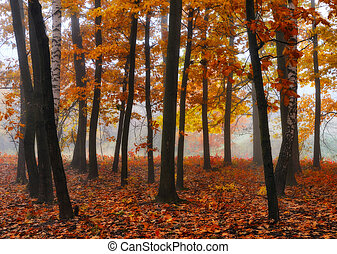 秋, 絵のよう, 朝, forest., 森林, 霧が濃い