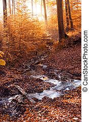 秋, 美しい, 景色。, すばらしい