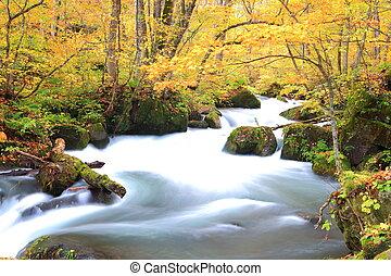 秋, 色, の, 奥入瀬, 流れ