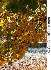 秋, 色, 中に, ∥, 葉