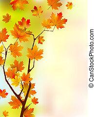 秋, 花, 絹, leaves.