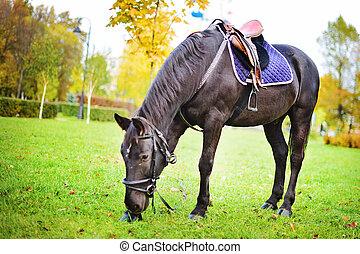 秋, 茶色の馬