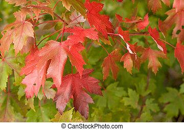秋, 落ちる, ただ