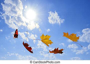 秋, 落ち葉
