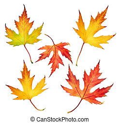 秋, 葉, セット