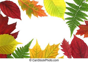 秋, 葉, デザイン