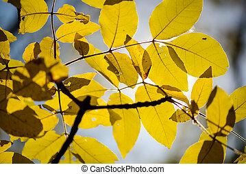 秋, 葉, デザイン, 黄色