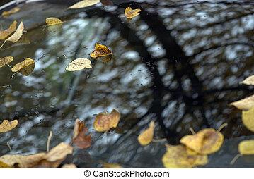 秋, 装飾