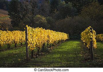 秋, 谷, willamette, オレゴン, ぶどう園