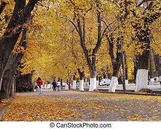 秋, 通り, 都市