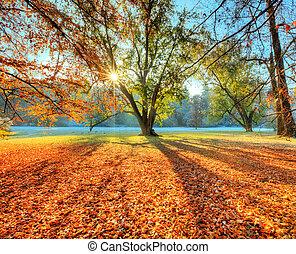 秋, 遅く, 森林, sunrays, 朝