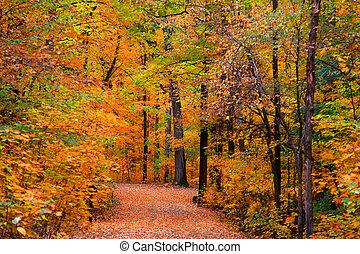 秋, 道, によって, 木