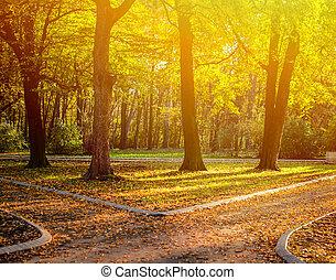 秋, 道, 森林, 2