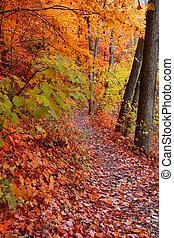 秋, 道, 歩くこと