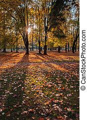 秋, 都市 公園, 現場
